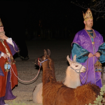 nativity kings lamas.9NPAQ